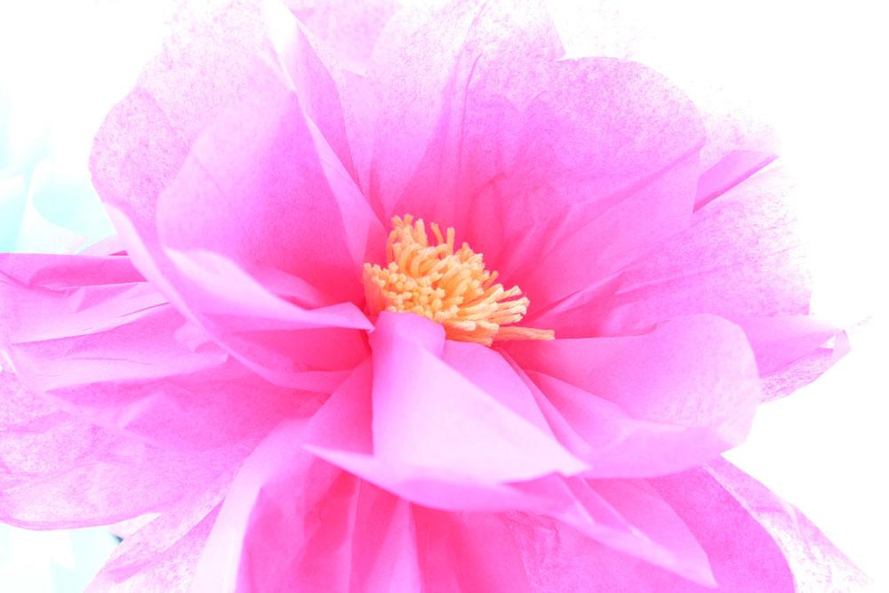tissue2-flower